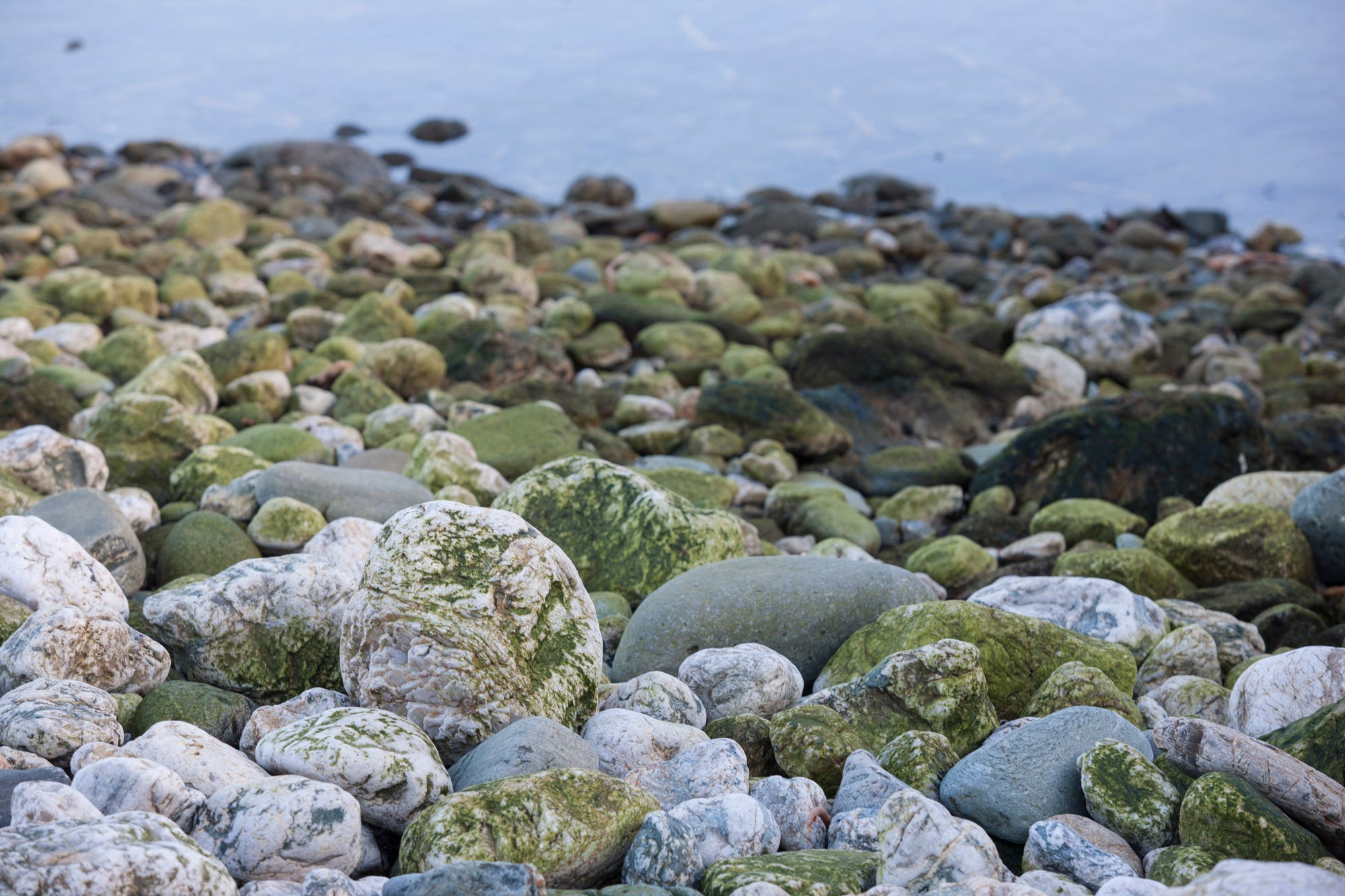 The shore at Hoswick, Shetland - Ebb stanes are revealed by the receding tide