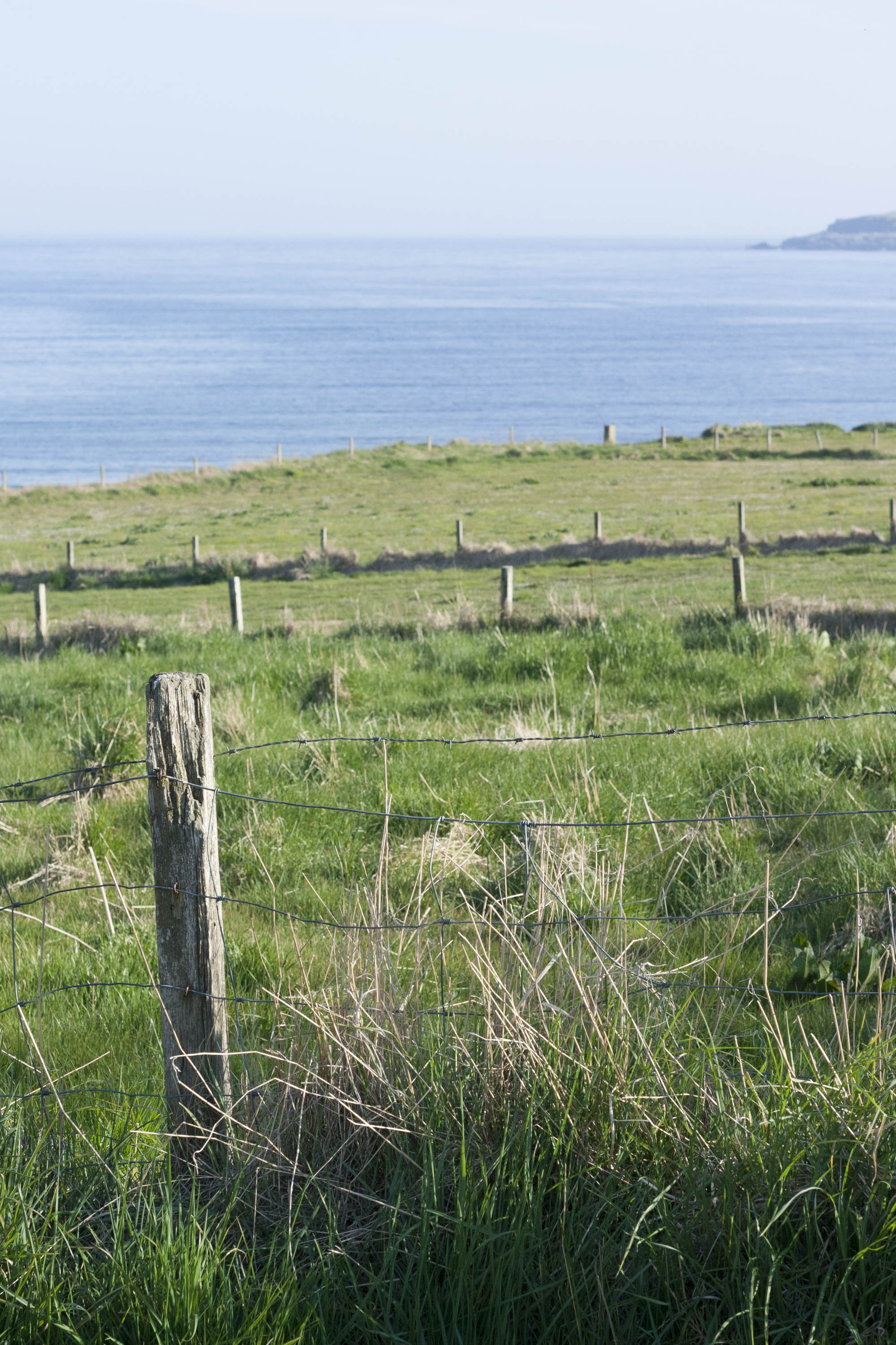 At Hoswick, Shetland, a view across fields to sea with a glimpse of Levenwick headland. A sunny day with spring grass growth and a fence post in the foreground