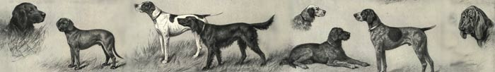 Drawing of various dog breeds