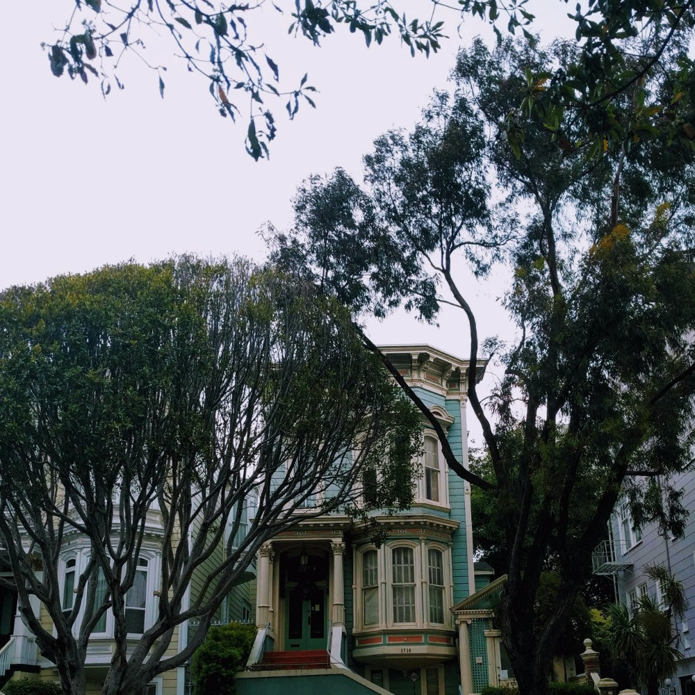 A green Victorian home shrouded by a large tree