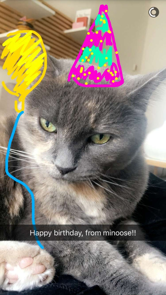 Snapchat of a cat in a birthday hat