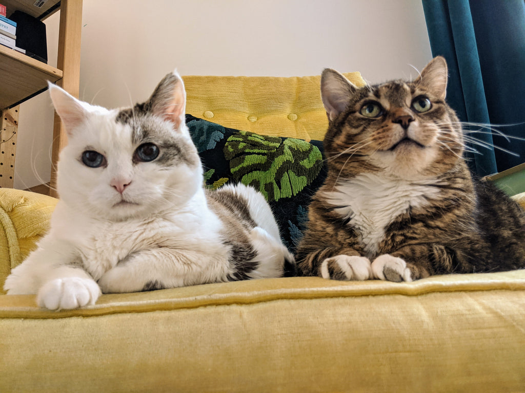 Two cats sit on a yellow chair and look up, over the camera