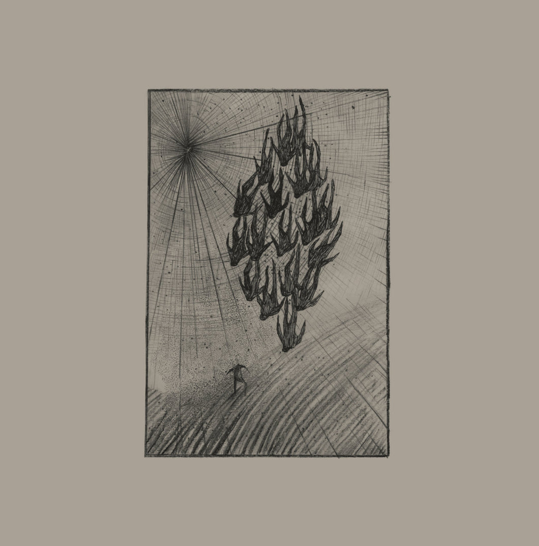 Aine O'Dwyer - Locusts LP