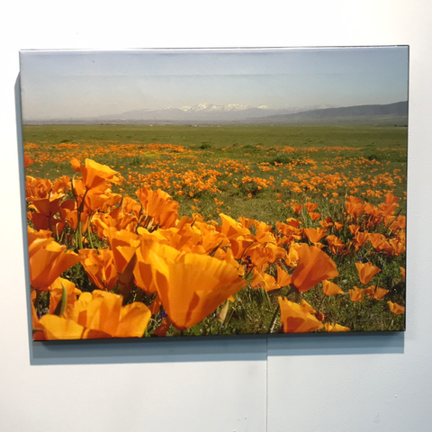 'A Field of Poppies' by Linda Hauser