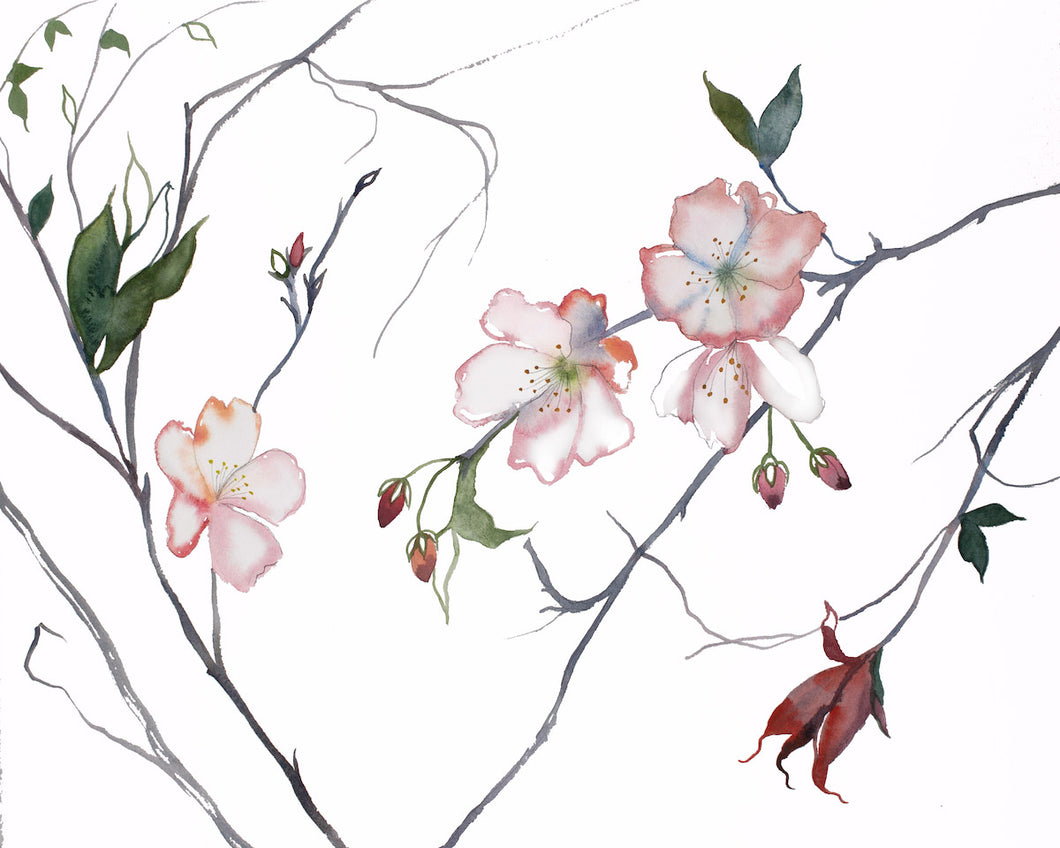 "16"" x 20"" original watercolor botanical cherry blossom floral painting in an expressive, impressionist, minimalist, modern style by contemporary fine artist Elizabeth Becker"