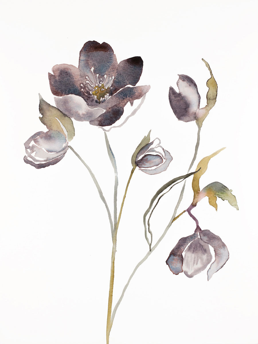 "9"" x 12"" original watercolor botanical hellebore floral painting in an expressive, impressionist, minimalist, modern style by contemporary fine artist Elizabeth Becker. Soft violet purple, gray olive green, gold and white colors."
