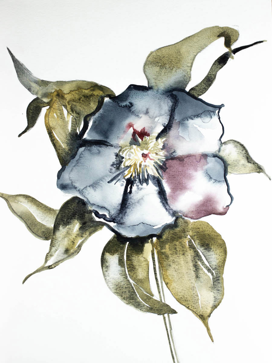 "9"" x 12"" original watercolor botanical hellebore floral painting in an expressive, impressionist, minimalist, modern style by contemporary fine artist Elizabeth Becker"
