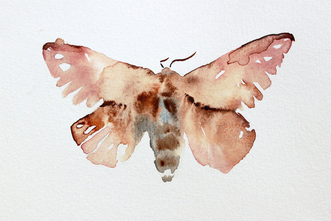 "5"" x 7"" original watercolor greater wax moth, butterfly painting in an expressive, impressionist, minimalist, modern style by contemporary fine artist Elizabeth Becker. Soft neutral pink and, peach, burnt sienna and white colors."