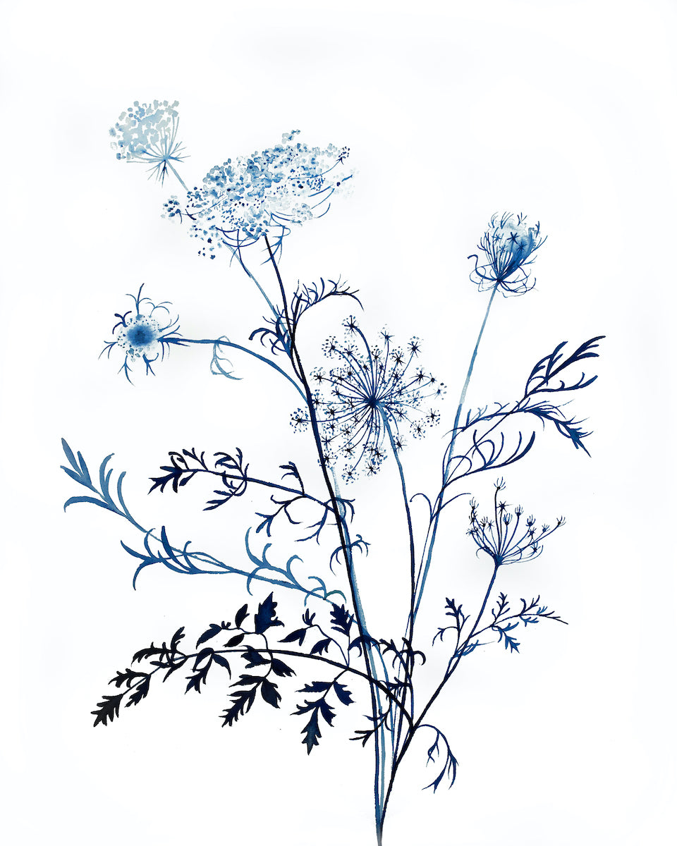 "16"" x 20"" original watercolor queen anne's lace botanical wildflower painting in an expressive, impressionist, minimalist, modern style by contemporary fine artist Elizabeth Becker. Soft and deep monochromatic blue and white colors."