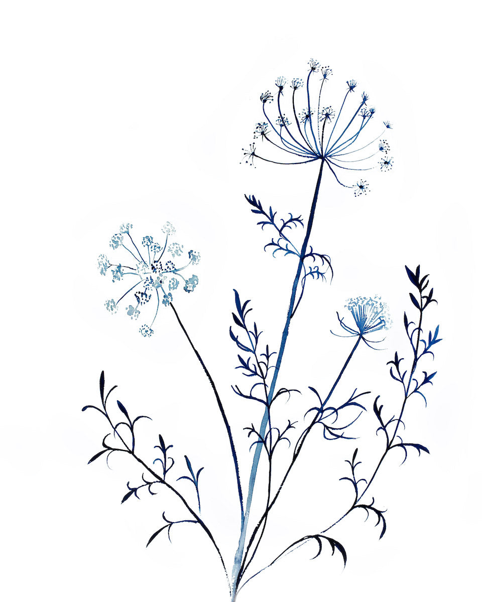 Queen Anne's Lace No. 13