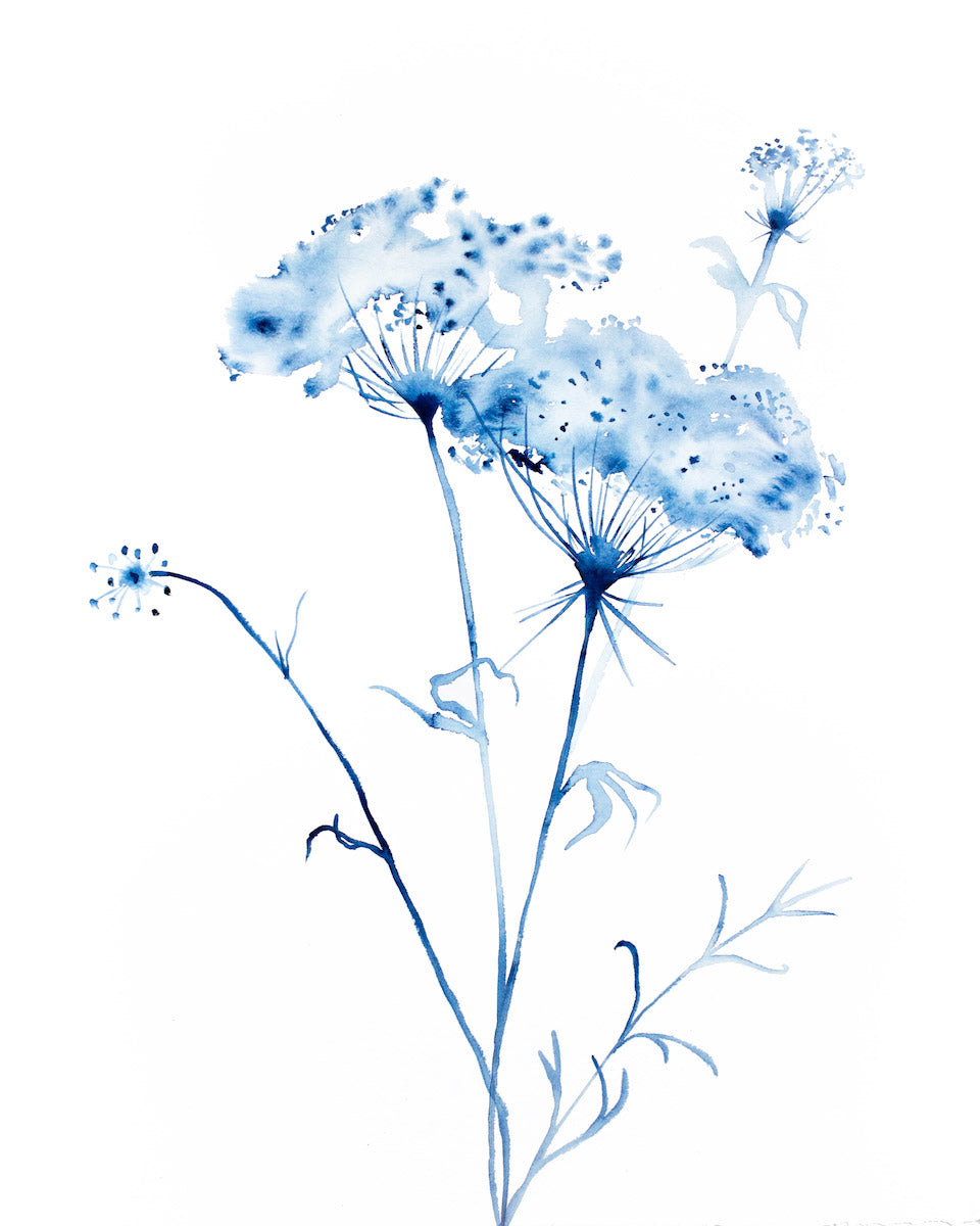 "16"" x 20"" original watercolor queen anne's lace botanical wildflower painting in an expressive, impressionist, minimalist, modern style by contemporary fine artist Elizabeth Becker. Monochromatic soft blue and white colors."
