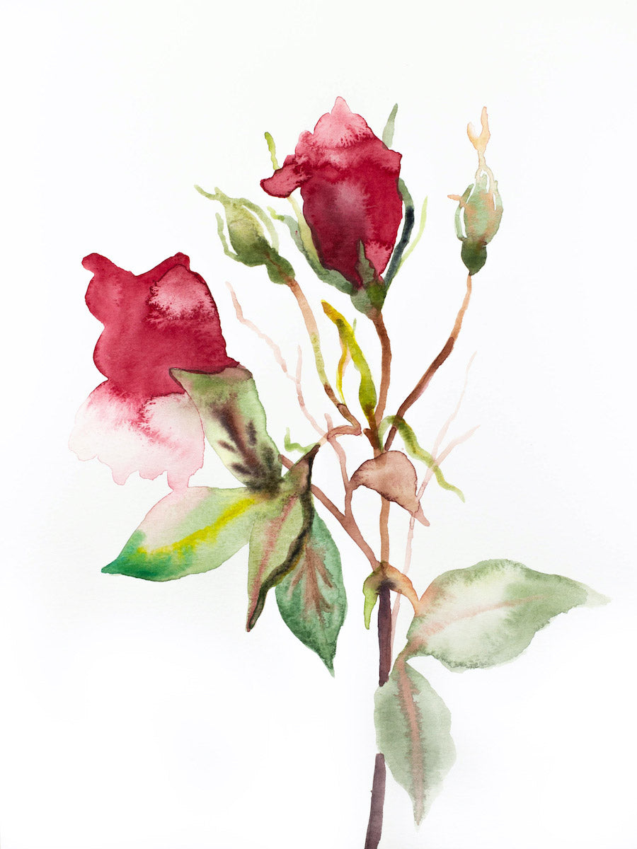 "9"" x 12"" original watercolor botanical floral rose painting in an expressive, impressionist, minimalist, modern style by contemporary fine artist Elizabeth Becker. Soft green, red and white colors."