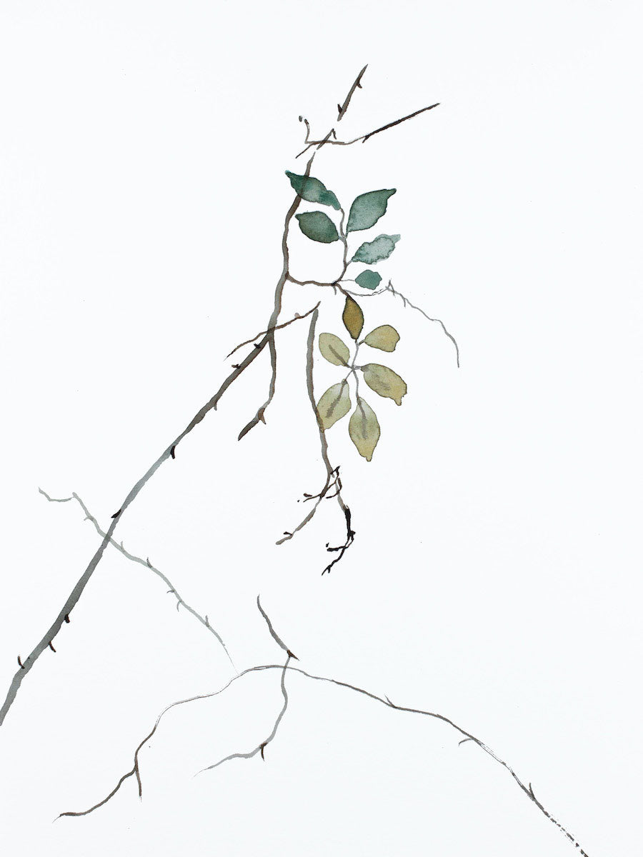 "9"" x 12"" original watercolor botanical nature line painting of plant, leaves and branches in an expressive, impressionist, minimalist, modern style by contemporary fine artist Elizabeth Becker. Soft blue green, gold, gray and white."