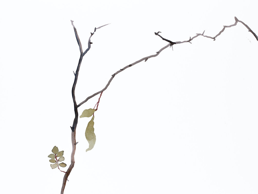 "9"" x 12"" original watercolor botanical nature line painting of plant, leaves and branches in an expressive, impressionist, minimalist, modern style by contemporary fine artist Elizabeth Becker. Soft green gold, gray and white colors."