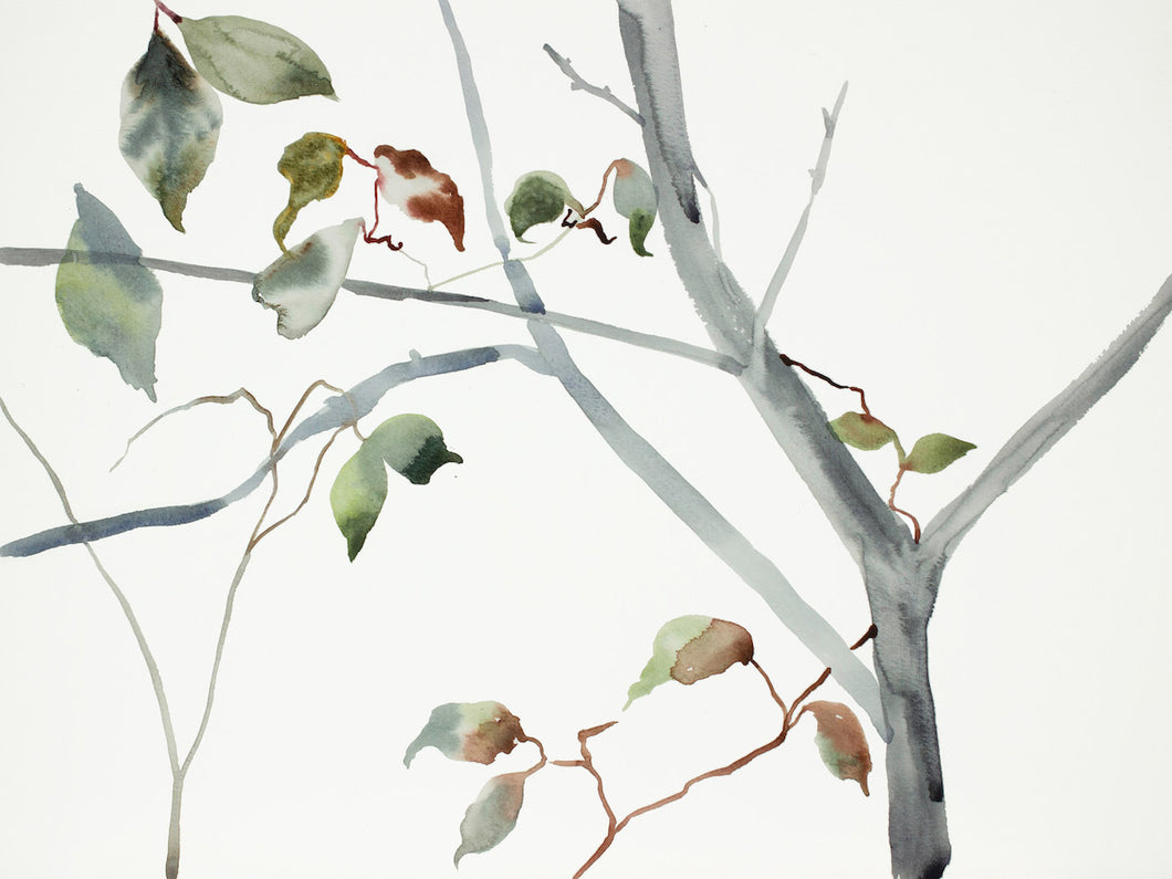 "12"" x 16"" original watercolor botanical nature forest painting of tree, leaves and branches in an expressive, impressionist, minimalist, modern style by contemporary fine artist Elizabeth Becker. Soft green gold, gray and white colors."