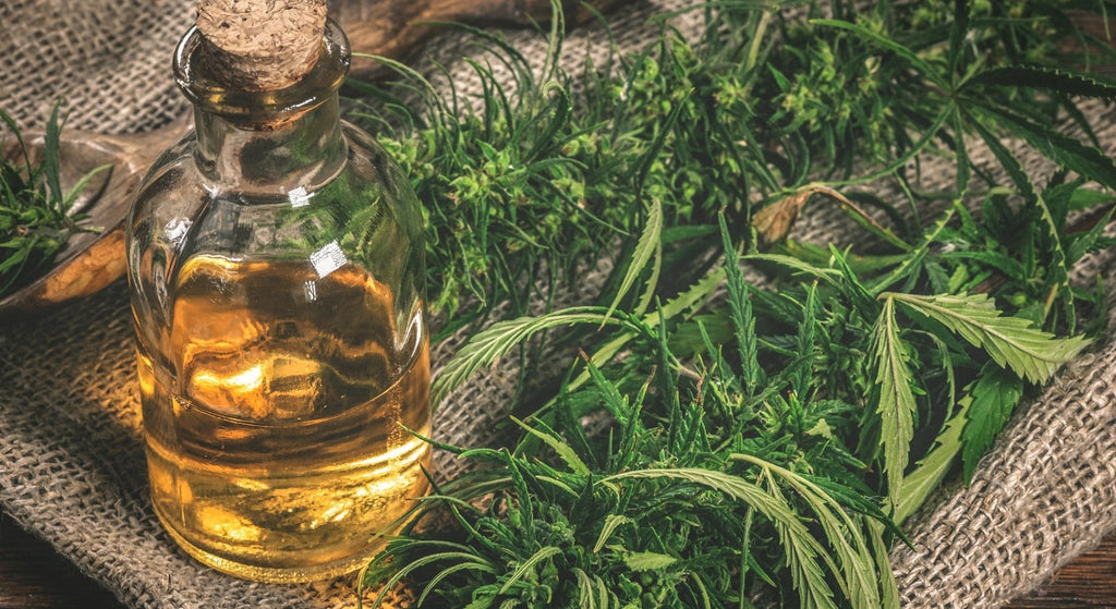 CBD oil made from cannabis or hemp leaves can be included in many recipes