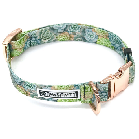 Pawsitivity - Small - Green Succulents Collar
