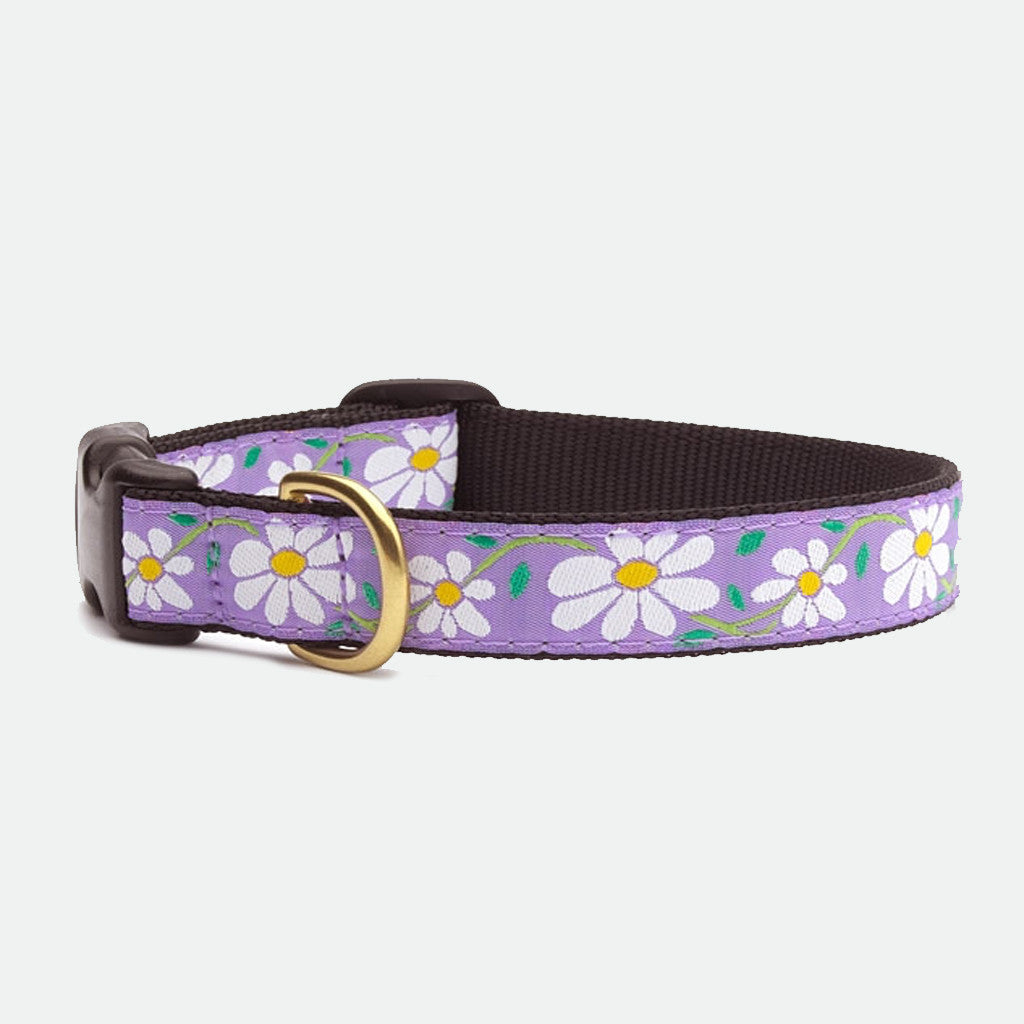 Upcountry Daisy dog collar