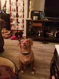 Store Mascot and Adored Family Member Lucy Bella