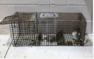 mouse trap cage