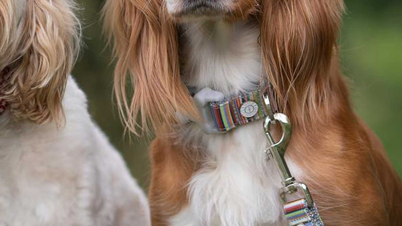 Hugo & Hudson Dog Collars, Coats & Accessories