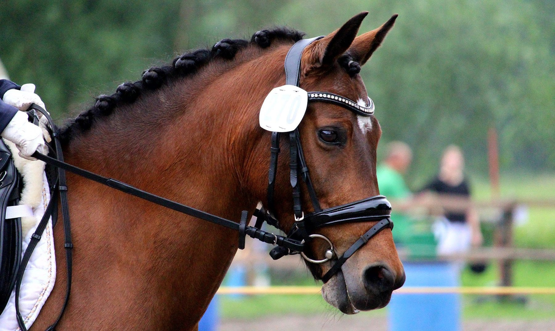 A guide to Dressage for Beginners