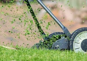 Horses Shouldn't Eat Lawn Clippings