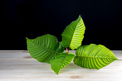 Differences Between Kava And Kratom Root Of Happiness