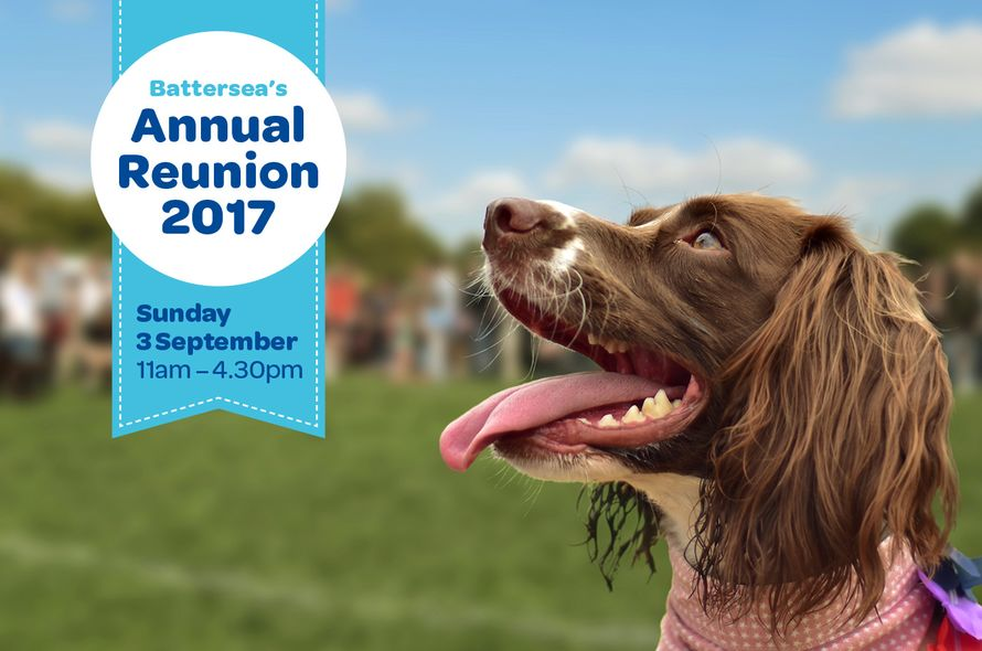 Pet Pavilion Takes Battersea Dog and Cats Home Annual Reunion Event at Battersea Park!