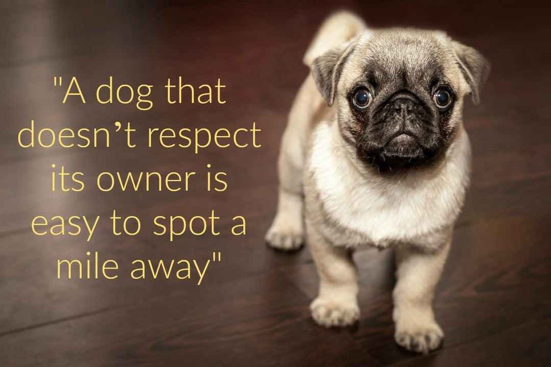 Dog Lovers - Does Your Pet REALLY Respect You?