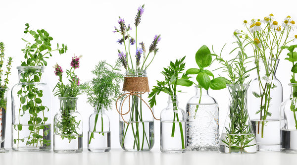 5 Immunity Boosting Plants and Herbs