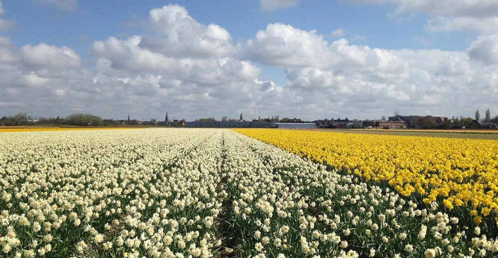 Sourcing flowers in Holland for our Spring Collection 2019