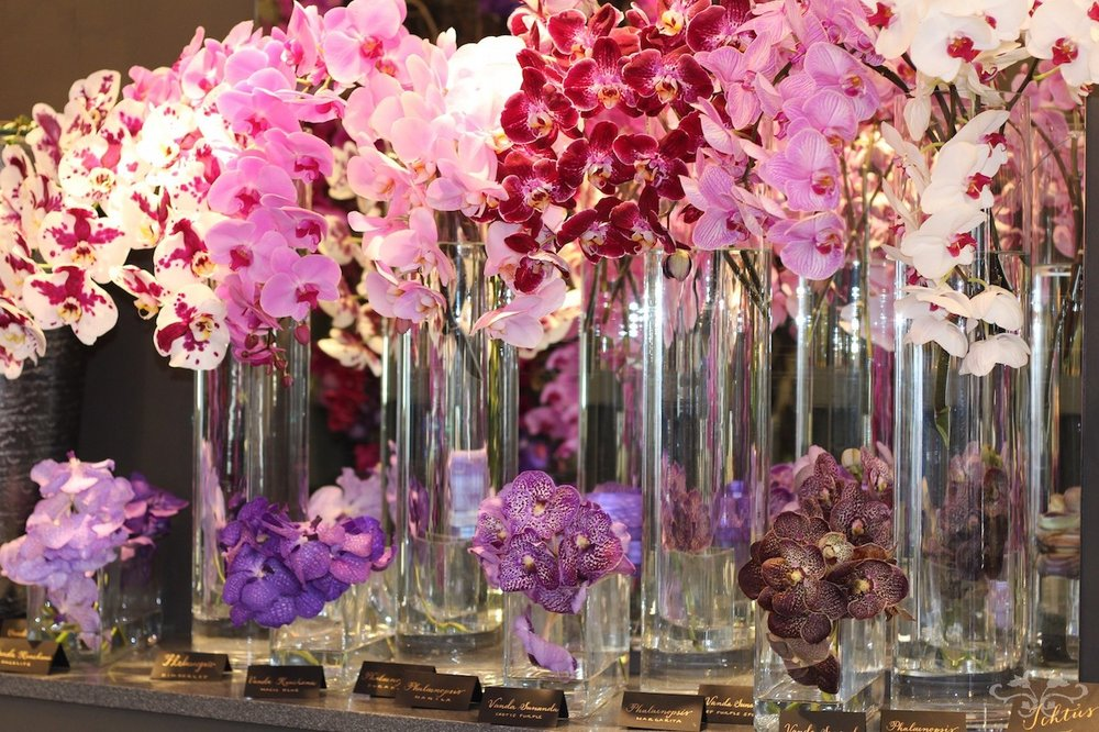 Phalaenopsis and Vanda Orchids at Neill Strain Floral Couture Belgravia