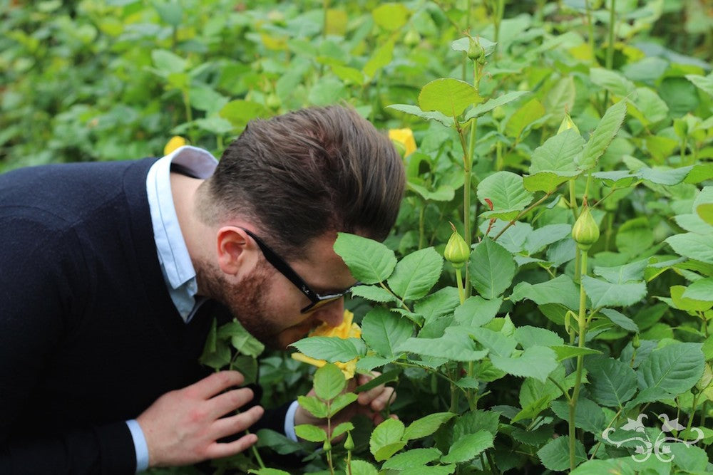 Neill Strain sourcing scented Roses in Holland