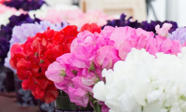 Fragrant sweet peas at Neill Strain Floral Couture Belgravia