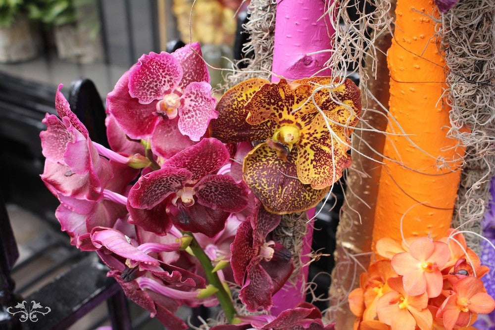 For the love of ORCHIDS display at Neill Strain Floral Couture