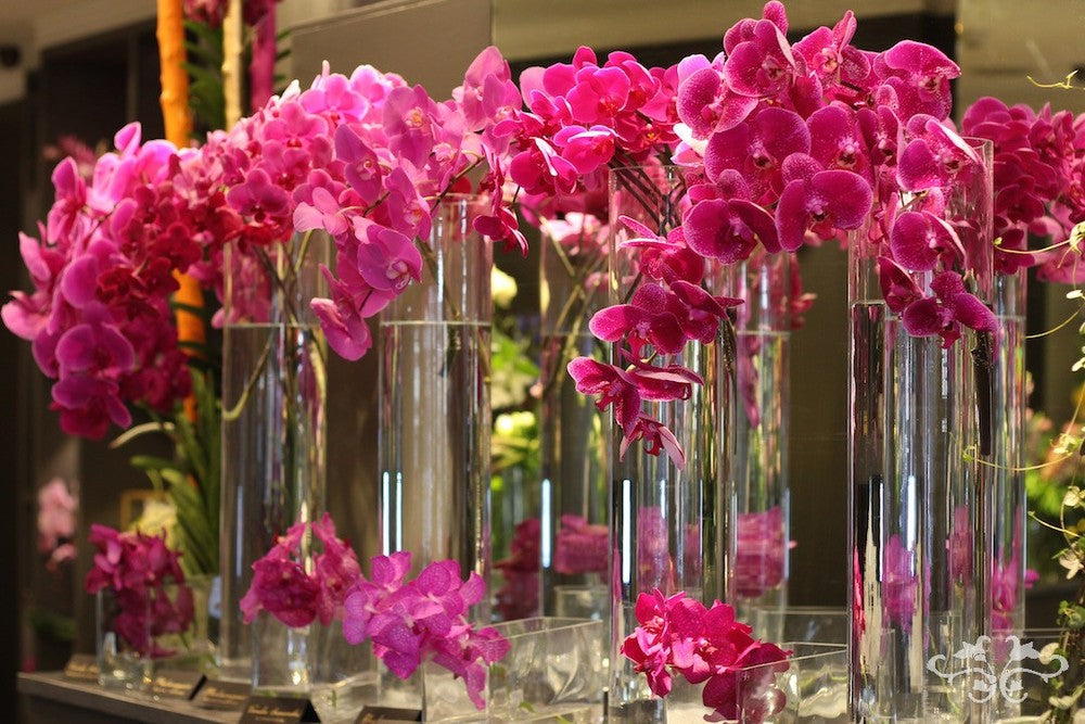Each Vanda and Phalaenopsis plant was named for guests to see.