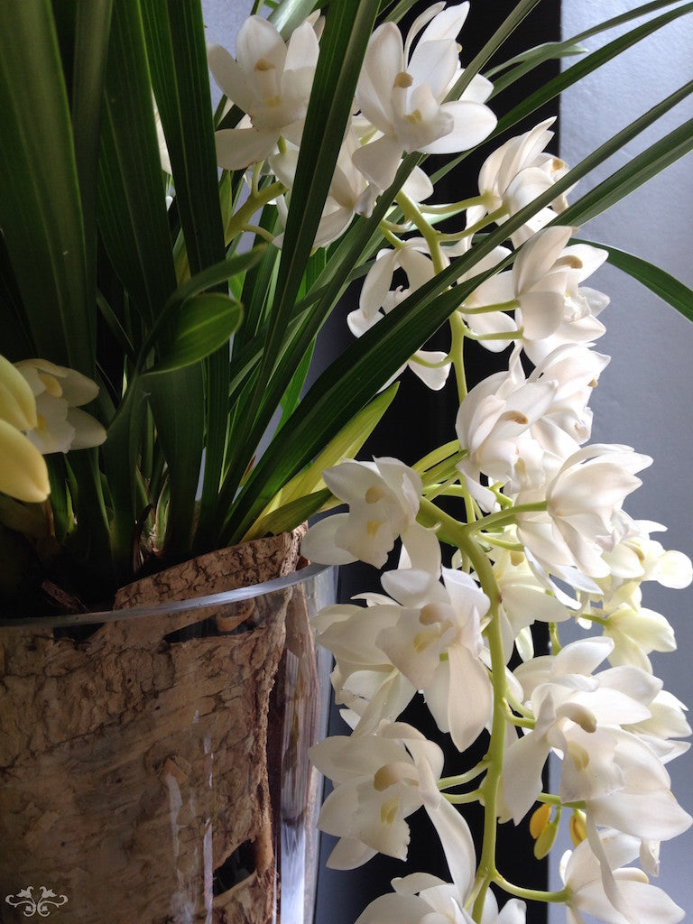 """A few rare Cymbidium Orchids are """"Trailing"""" like this exquisitely elegant white one. Also available in pale and dark pinks and purple."""
