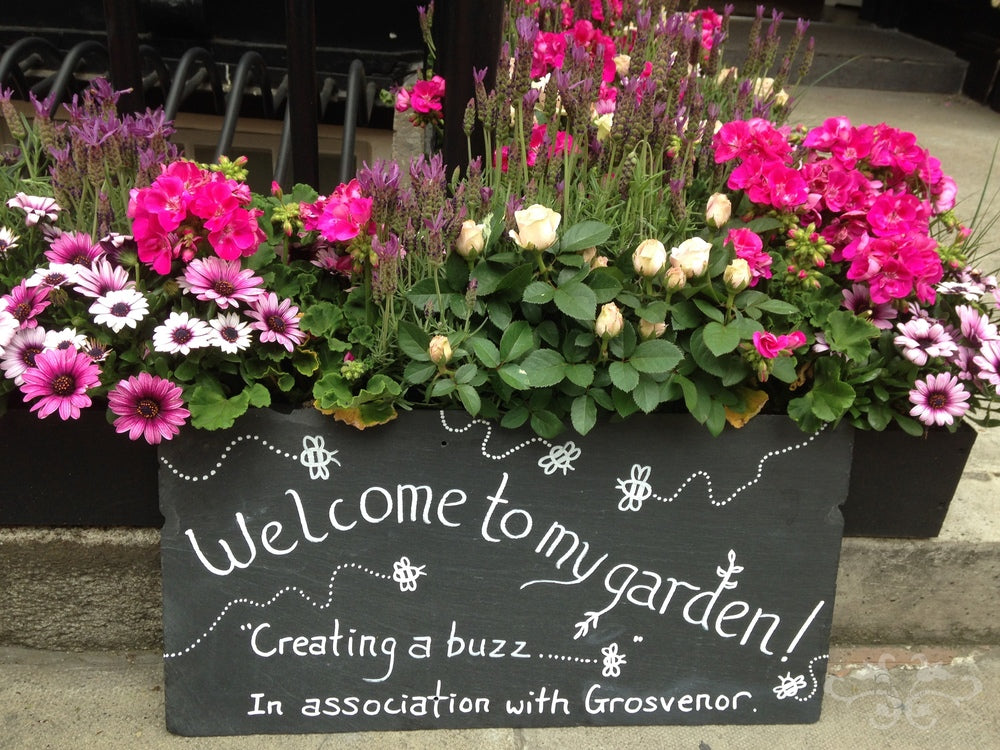 """Introducing a new service for our Belgravia-and-beyond clients :  Window boxes, hanging baskets, patio containers and """"living walls"""" all composed of bee-friendly plants and flowers..."""