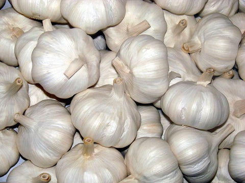 GARLIC FRESH 1 LB