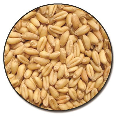 Briess Red Wheat Raw Whole Grain 1 lb