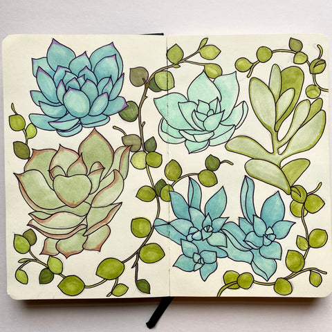 succulent illustrations, pen and ink by Kate Broughton