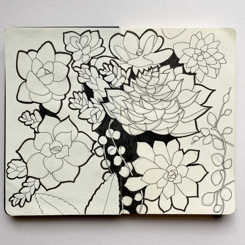Succulent drawings, pen and pencil outlines, by Kate broughton