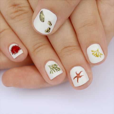 Beachcombing Nail Art Transfers