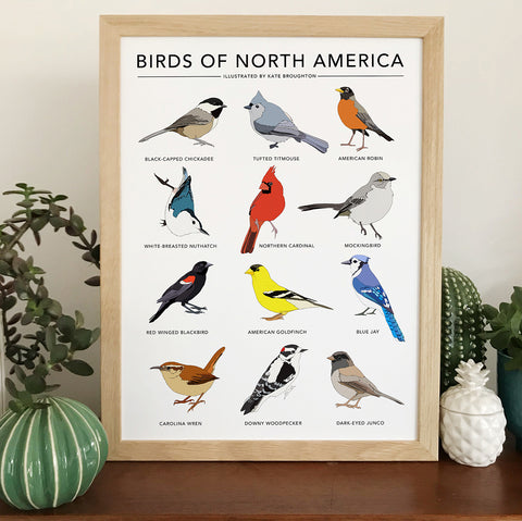 Birds of North America Print