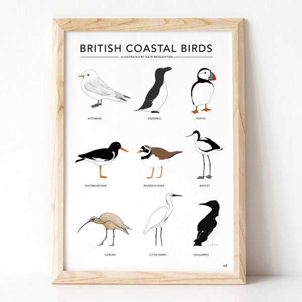 British Coastal Birds Print