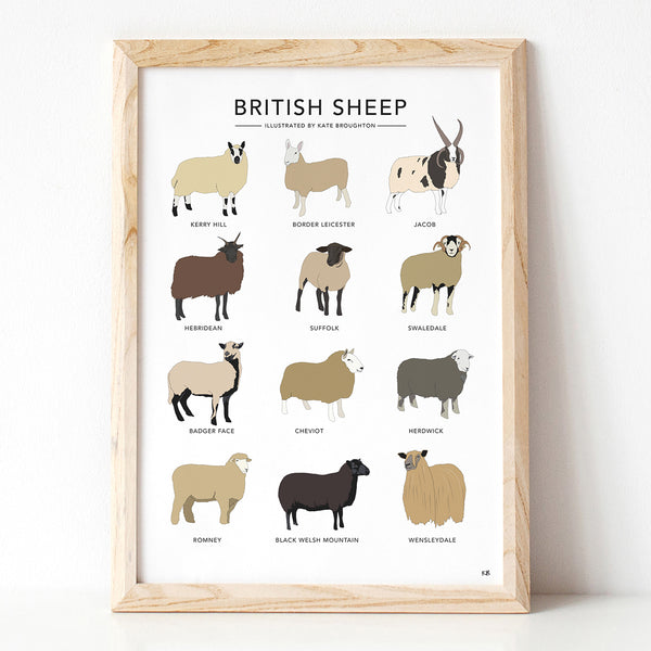 British Sheep Print