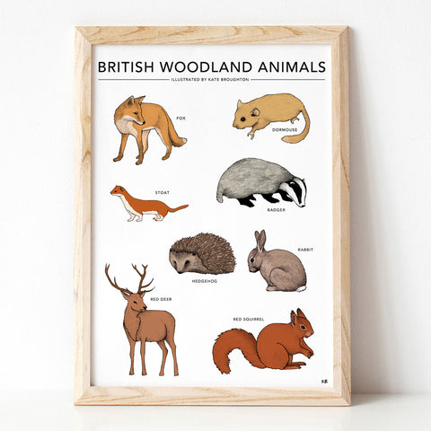 British Woodland Animals Print
