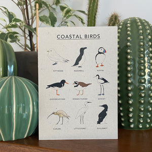Coastal Birds Illustrated Card