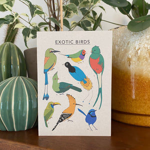 Exotic Birds Illustrated Card